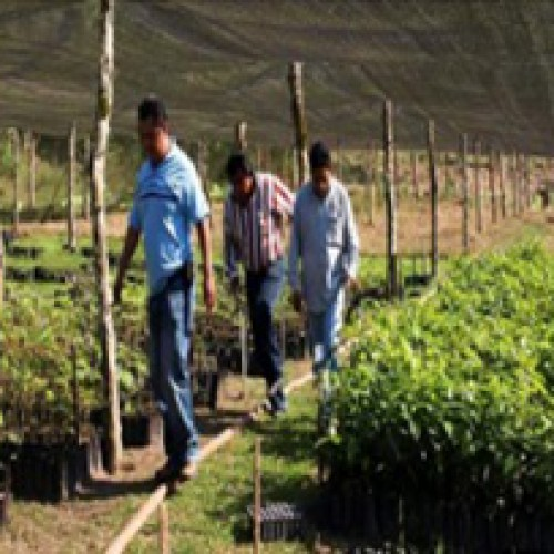 Organizing Tree Nursery And Compost Program