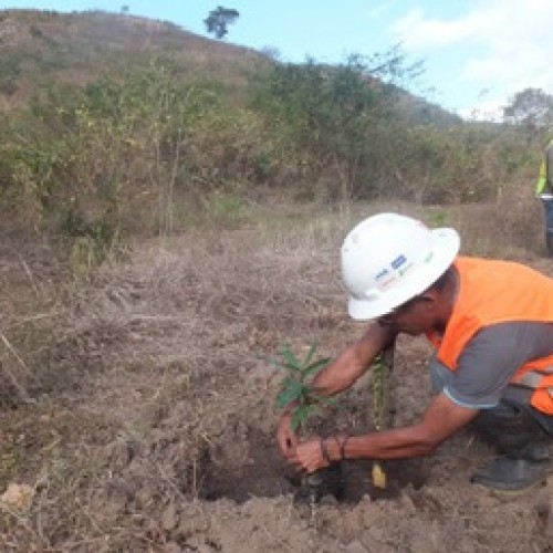 Reforestation Program