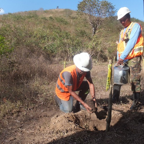 Planting Trees Along The Riviera Of Jicaro River